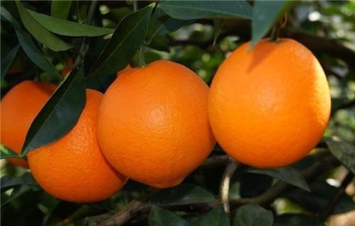 橙 子.jpg