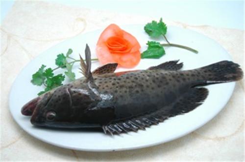 石斑鱼.jpg