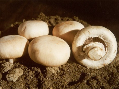 白菌菇.jpg