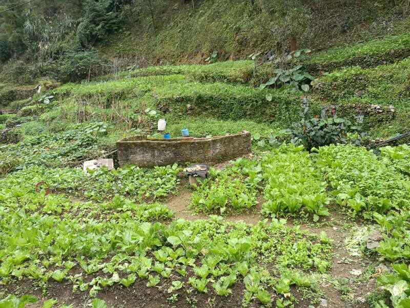 无公害蔬菜种植