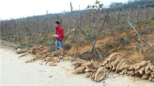 广西生态农业旅游