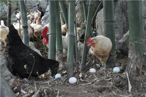 广西 什么是生态养殖