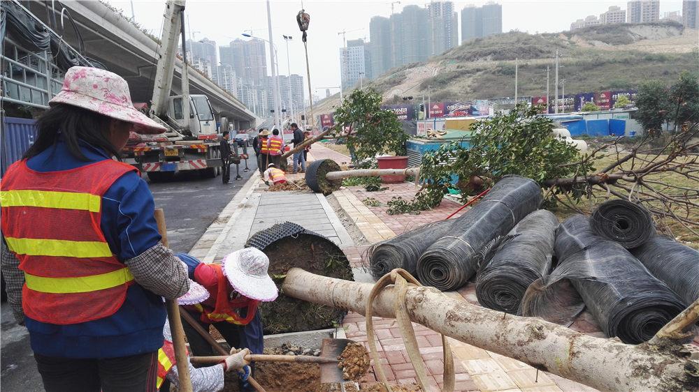 城市绿化工程