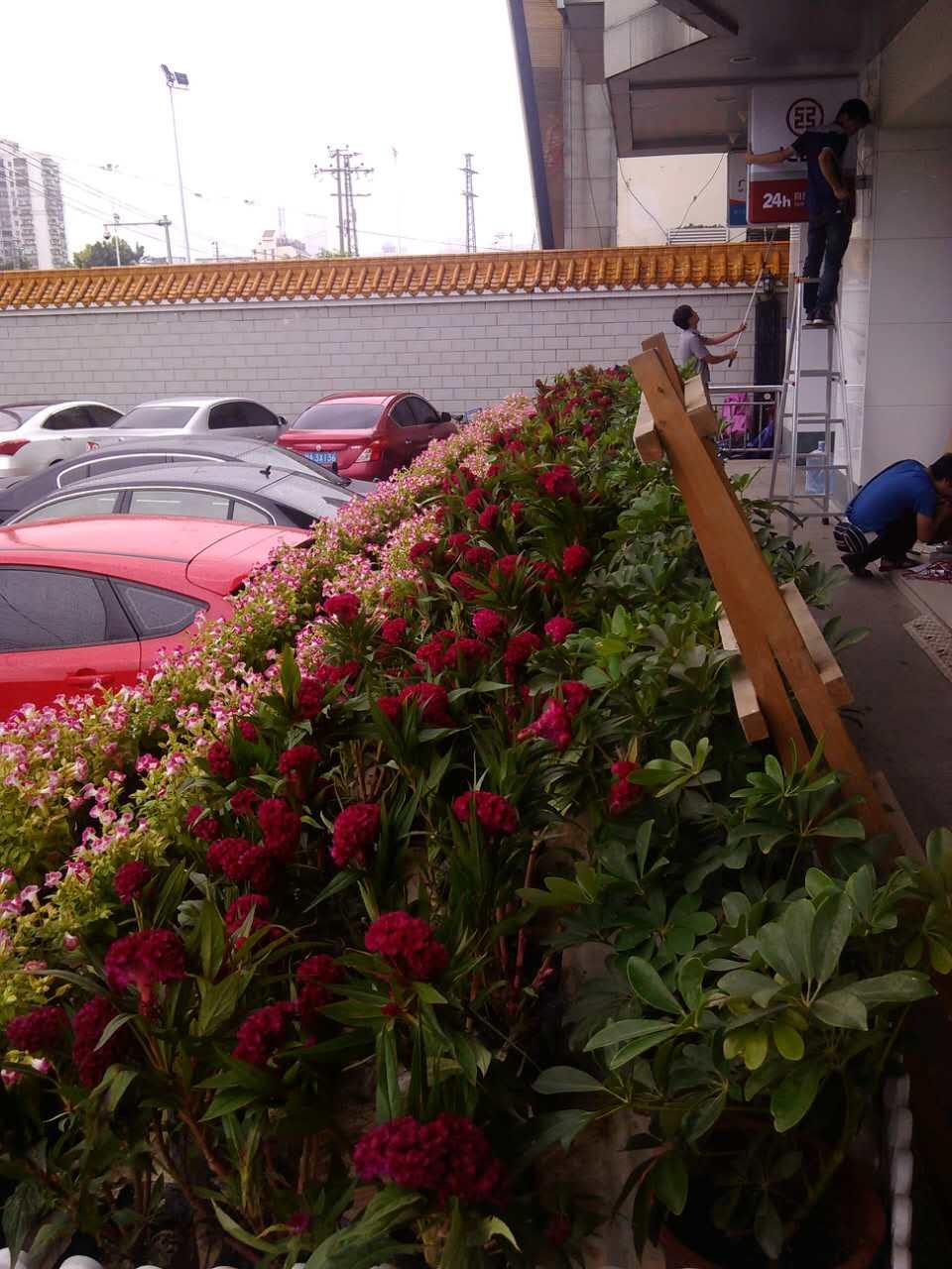 南寧公司綠化服務