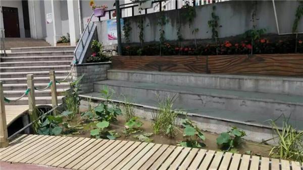 南宁校园景观种植