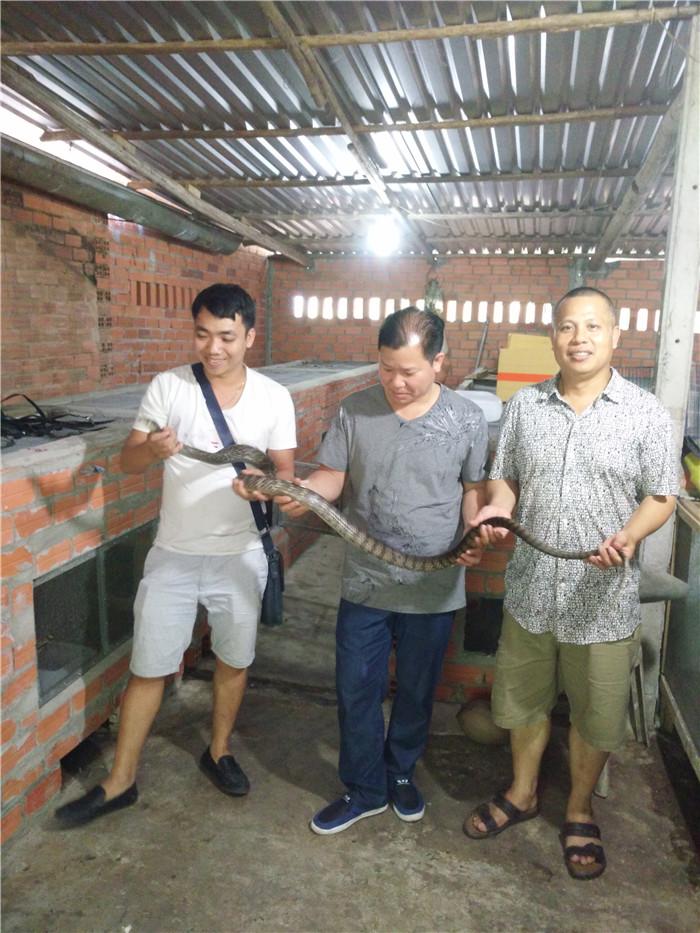 越南西贡水律蛇场