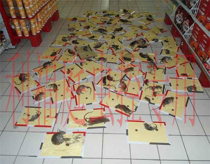 来宾超市灭鼠