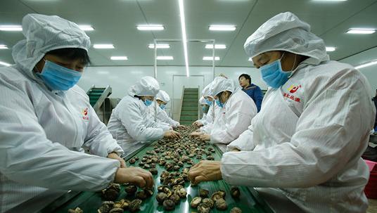 广西食用菌生产车间