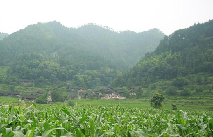 云南甜玉米种植基地