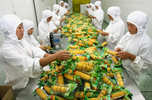 广西甜玉米生产车间