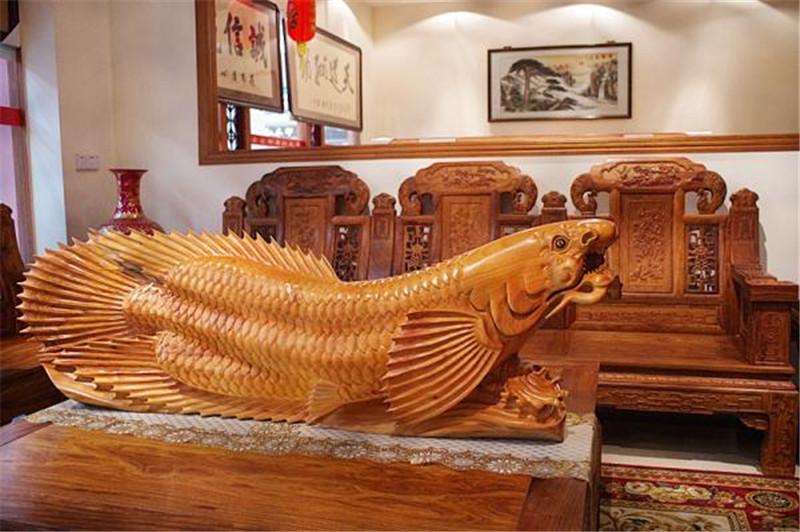 金龍魚 風水魚 香樟木
