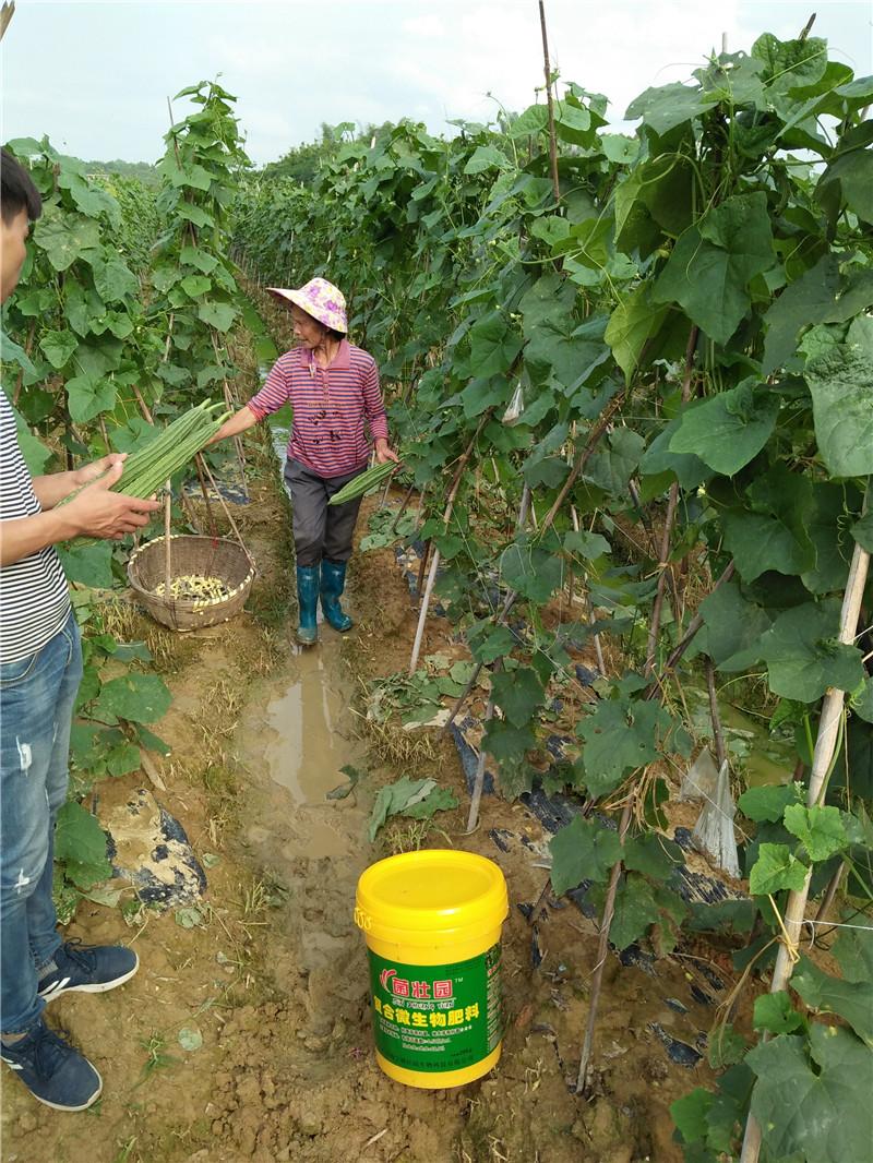微生物肥料施肥