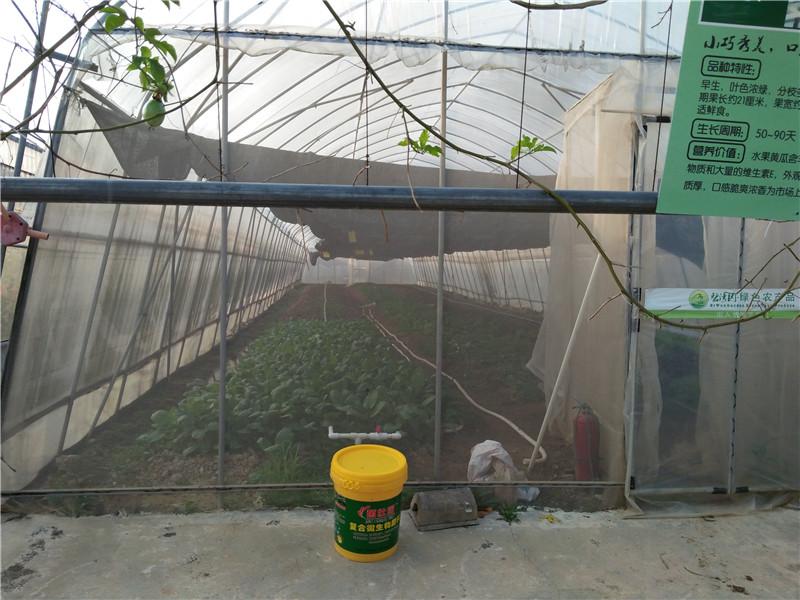 AG亚洲集团微生物肥料施肥过程