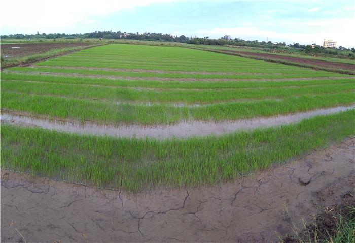 惠康集團潿洲島火山稻米種植基地2.jpg