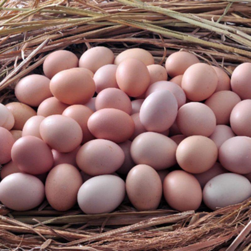 柳州红壳鲜鸡蛋
