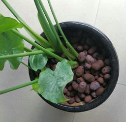园林绿化陶粒展示