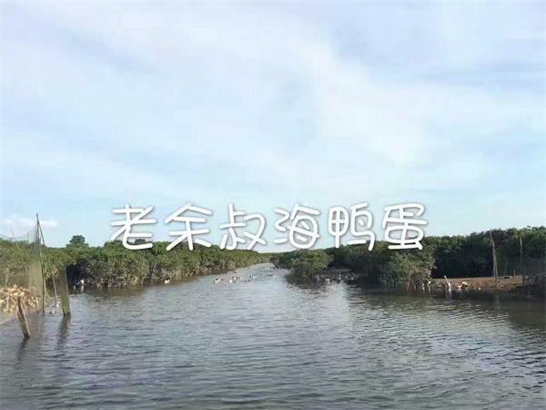 广东海生源海鸭养殖基地