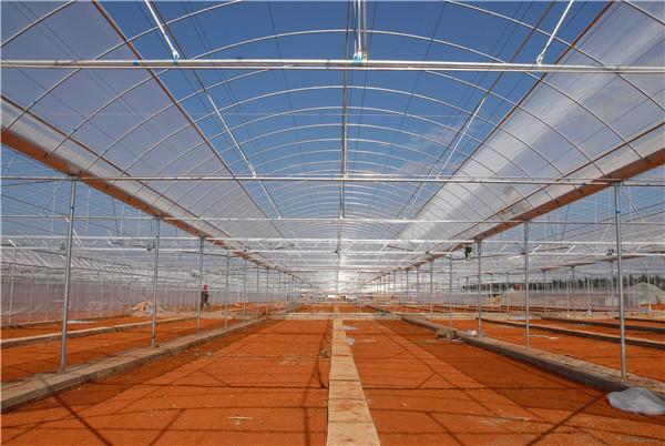 江西FRP采光瓦運用于蔬果瓜棚建造效果