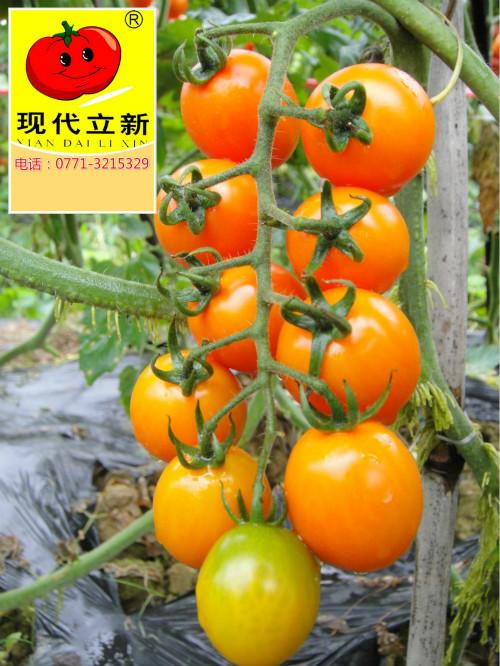 huangxiaomi_meitu_1.jpg