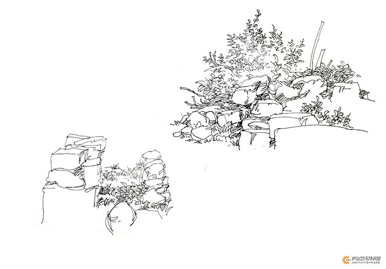 景观考研手绘_手绘植物组合钢笔表现