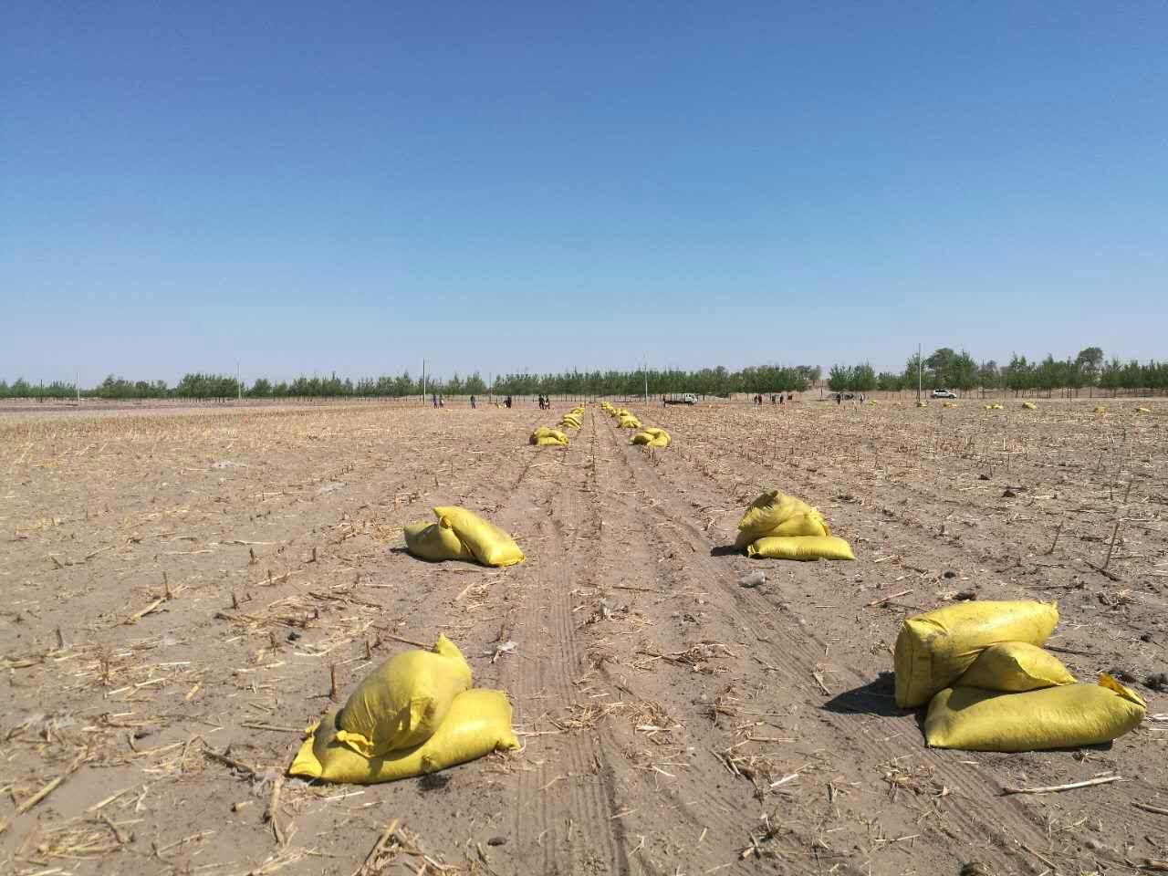 玉米地作业