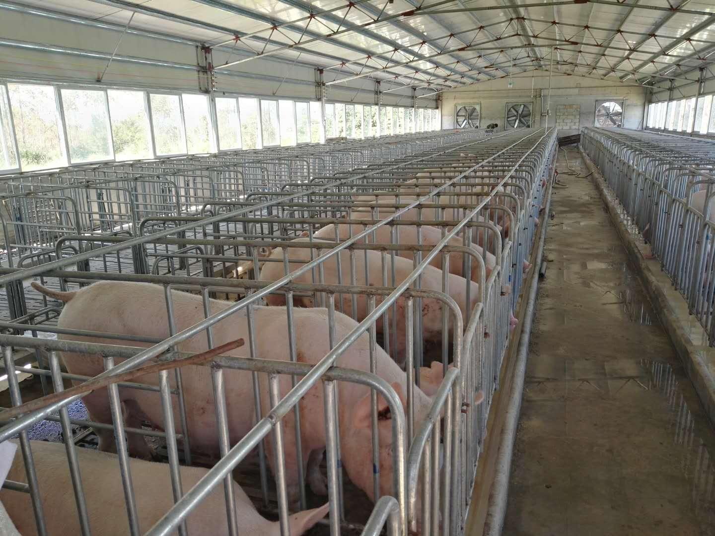生猪养殖场2.jpg