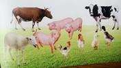 微生物饲料添加剂基本作用原理