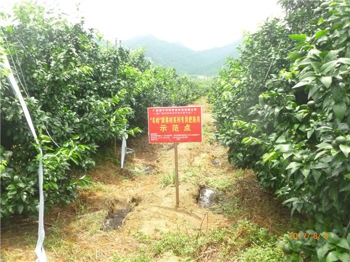 广西丰岭牌果树系列专用肥示范点
