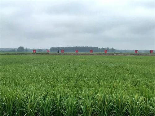 水稻试验田 (2).jpg