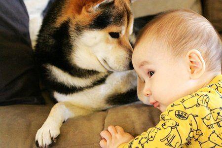 腸道細菌對寵物健康的影響