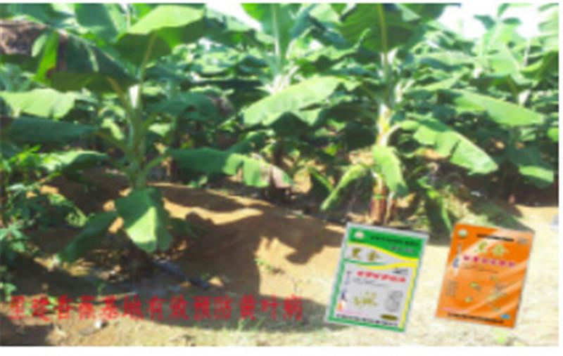 香蕉果园肥料展示