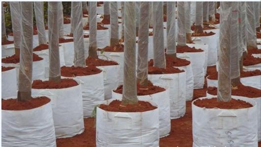 植树袋.jpg