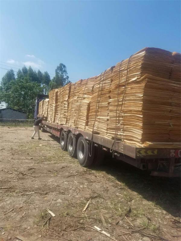 桉木单板运输