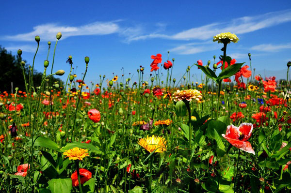 亚博yabo210花卉种子公司