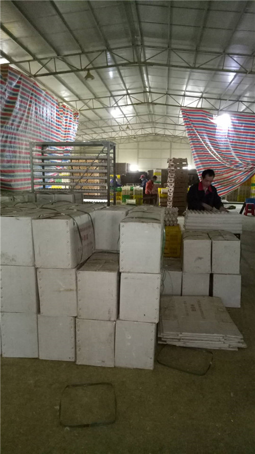 贵州孵化装箱
