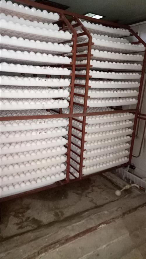 7天温水淋蛋