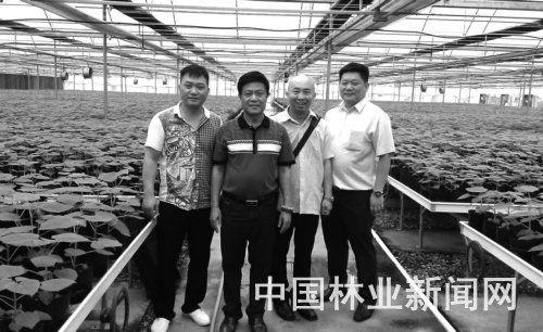 董事长李昆龙(左二)陪同客户参观日本三级乱伦育苗基地
