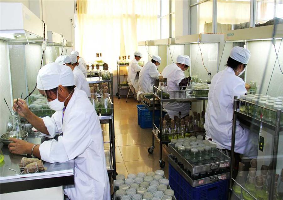 組培工廠無菌接種操作間