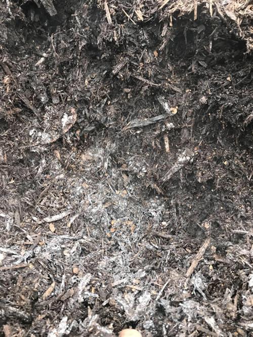 桉树皮+滤泥发酵