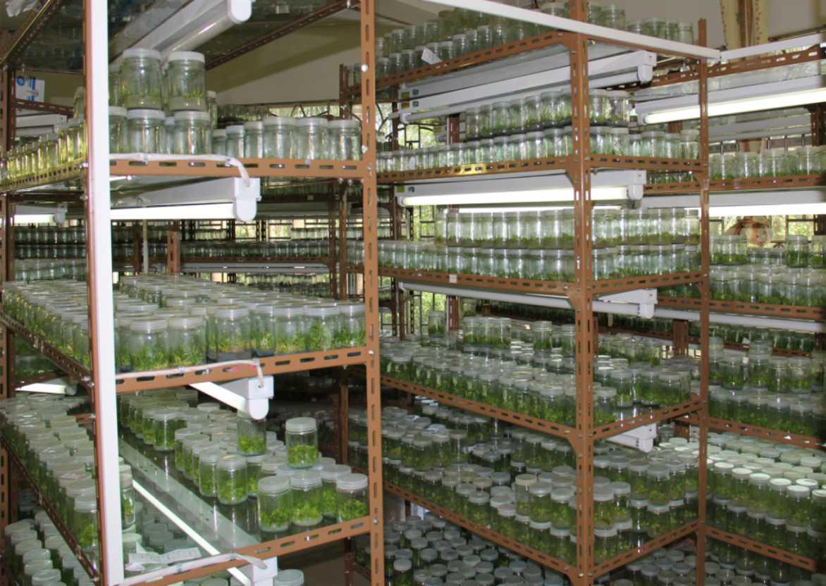 組培無菌培養室