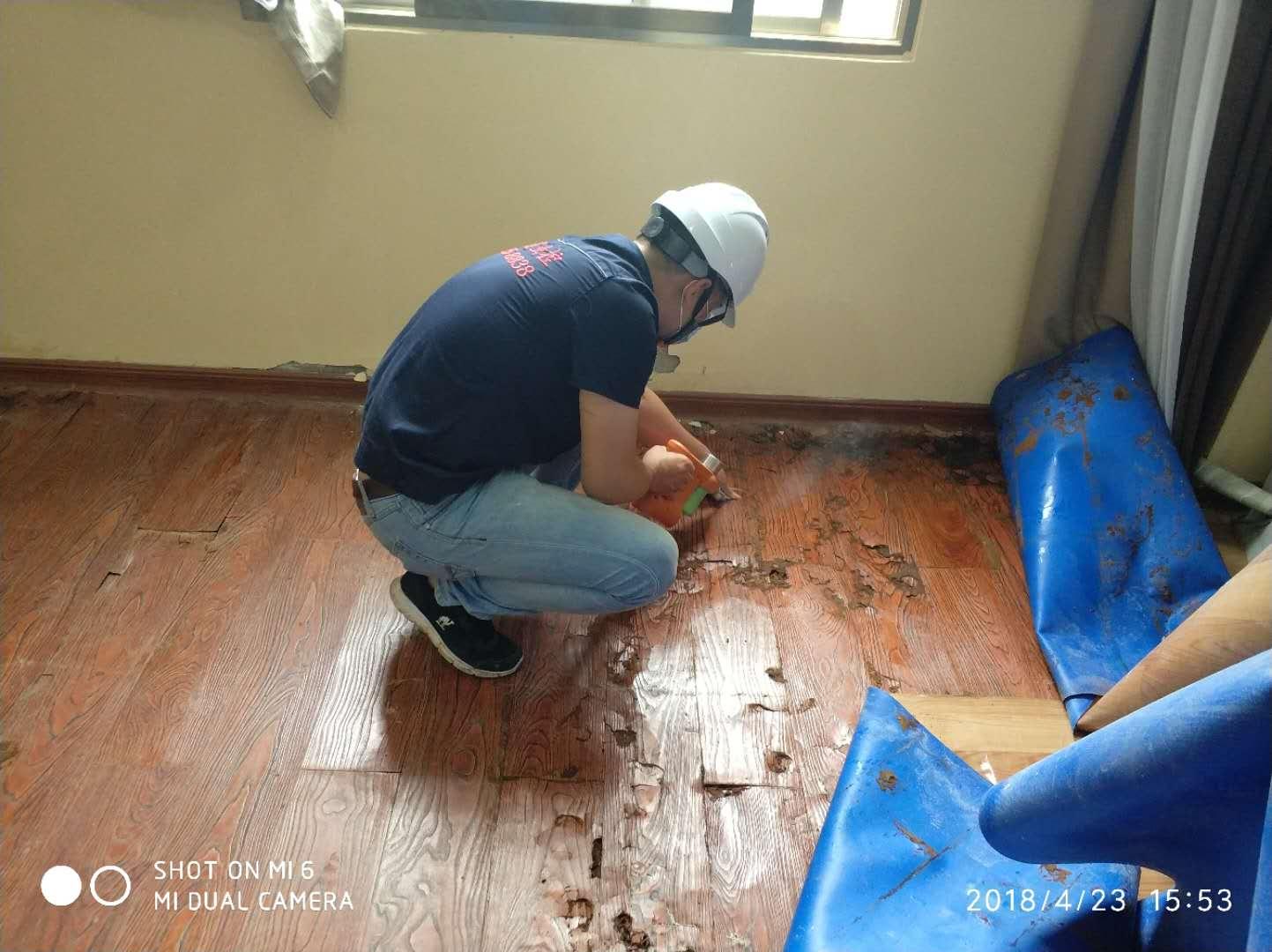 木地板灭白蚁