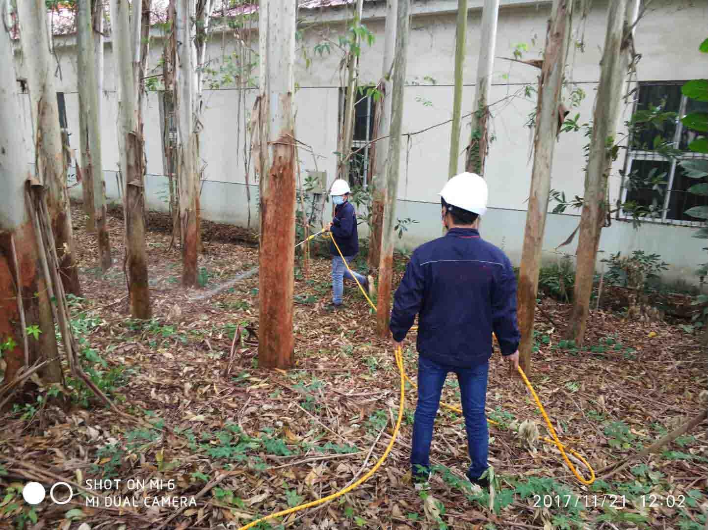 树木灭白蚁