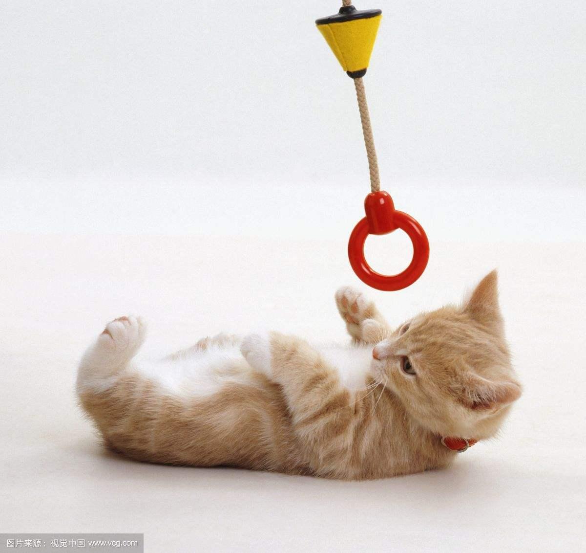 宠物玩具有哪些意义呢?
