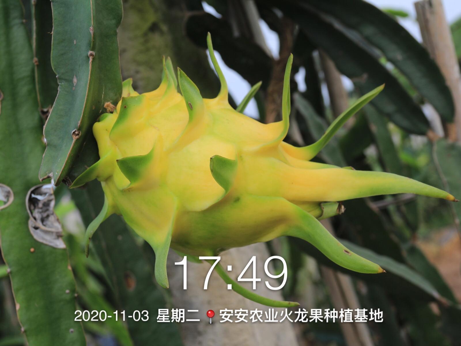 微信图片_20201108090002.jpg