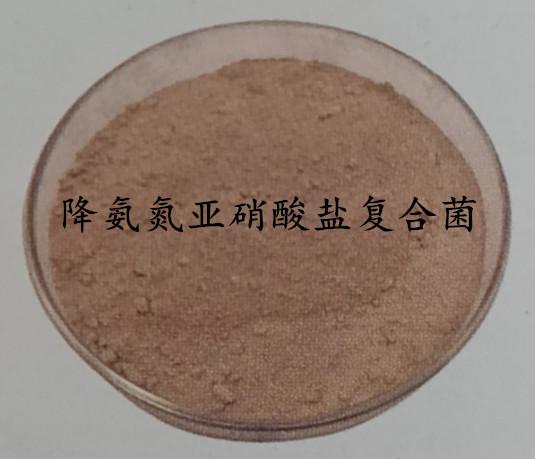 降氨氮亚硝酸盐复合菌
