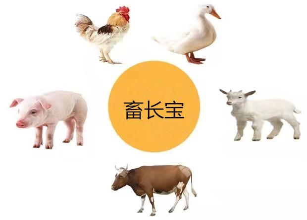 郑州畜长宝